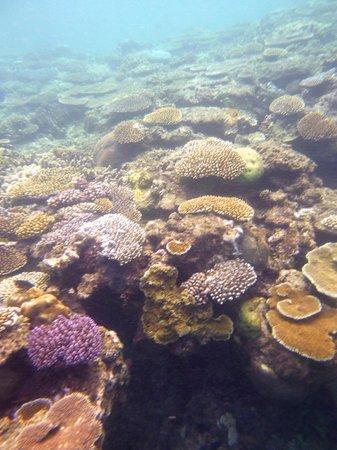 Yasawa Island Resort and Spa: coral off beach
