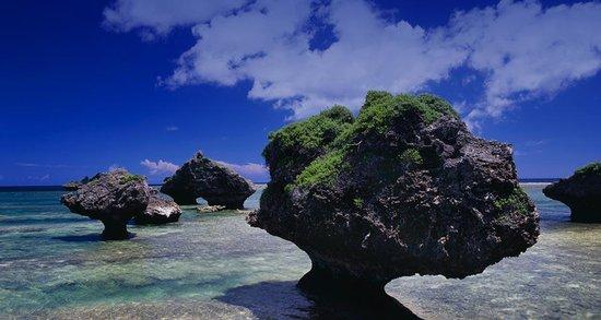 Coral Garden Guide, Miu