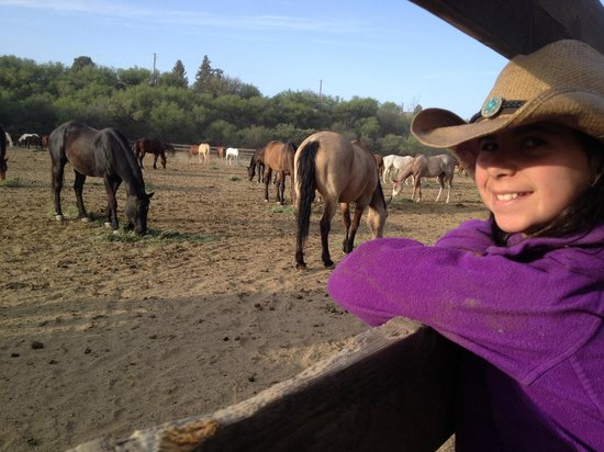 Circle Z Ranch: part of the corrals