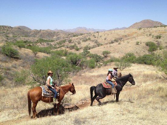 Circle Z Ranch : grasslands