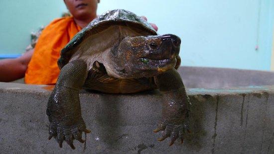 Mekong Turtle Conservation Center