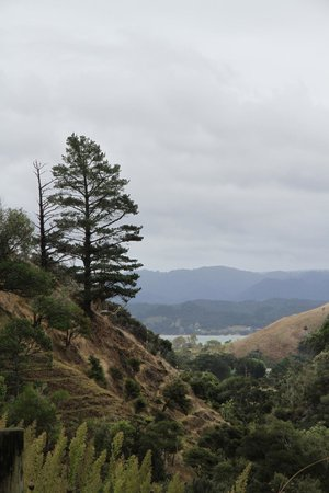 Waiotemarama Falls Lodge : View from country road
