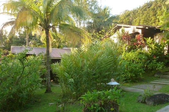 Piton Bungalows: les bungalows, le jardin