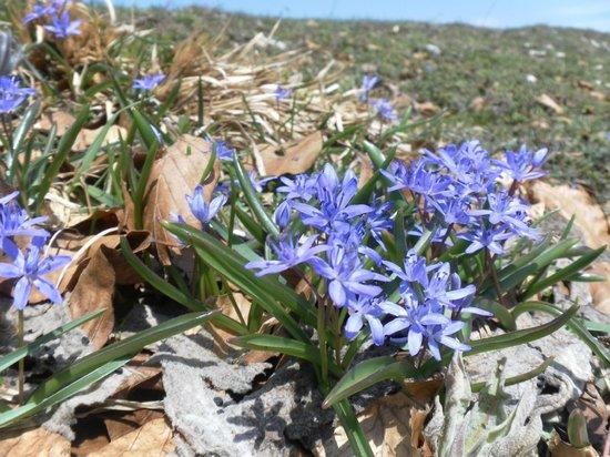 Monti Sibillini: Fiori celesti