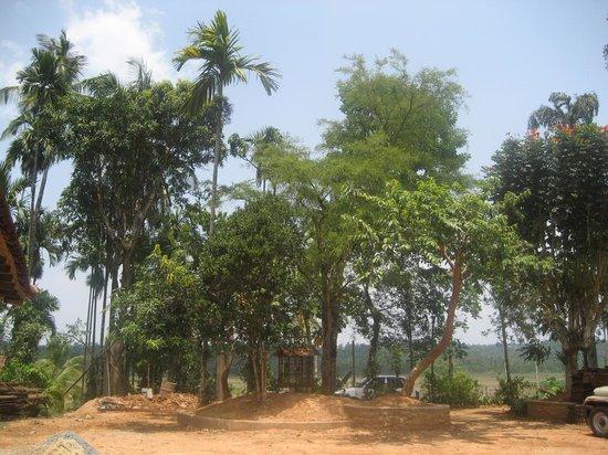 Kudajadri Drizzle Homestay : Environment around Kudajadri