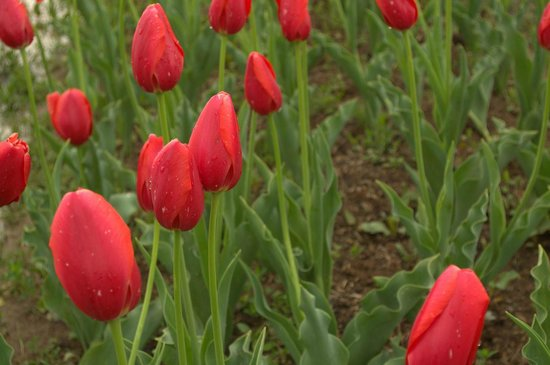 Beautiful view from the Tulip garden Picture of Indira