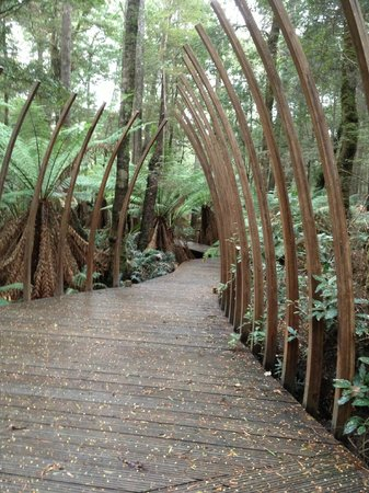 Tarkine Forest Adventure: The forest floor