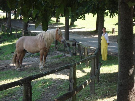 Schleswig-Holstein Open Air Museum: Working Horse