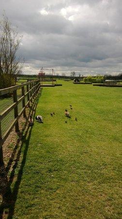 Rand Farm Park: rand farm