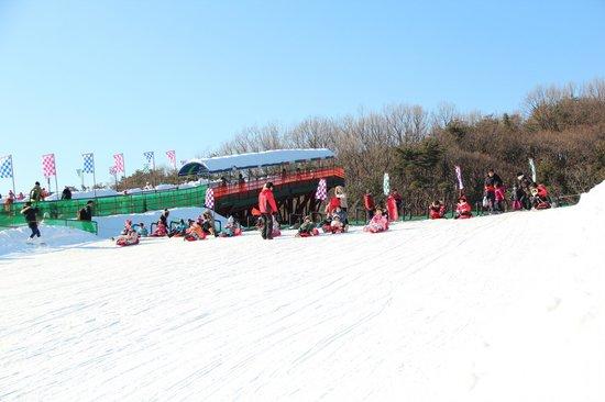 Seoul Land : Snow Sledding