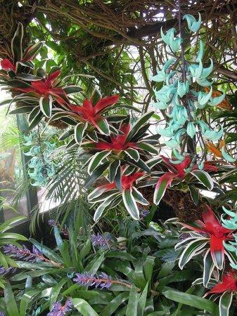 Giardini La Mortella : fiori