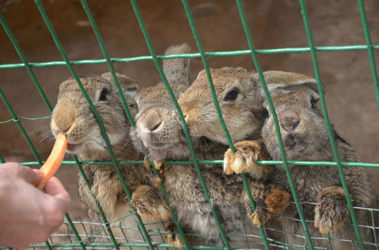 Almaty, Kazakhstan: голодные