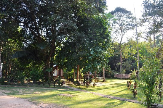 Durian Chalet: The surroundings