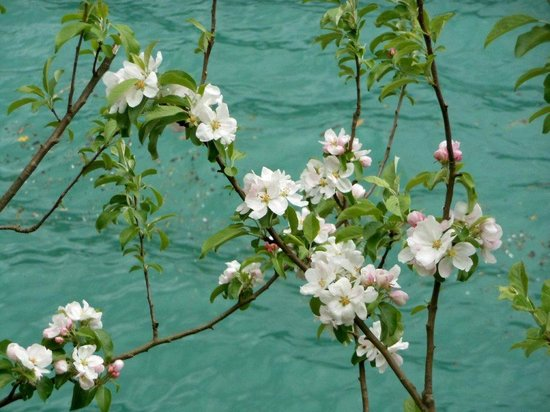 Hotel-Restaurant Flyhof: Blossoms over  the Walensee