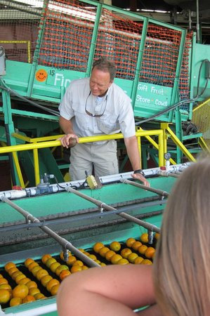 Al's Family Farms: The owner, Jeff, checking out the citrus being washed
