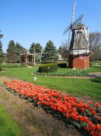 Veldheer Tulip Garden: May 2,2013