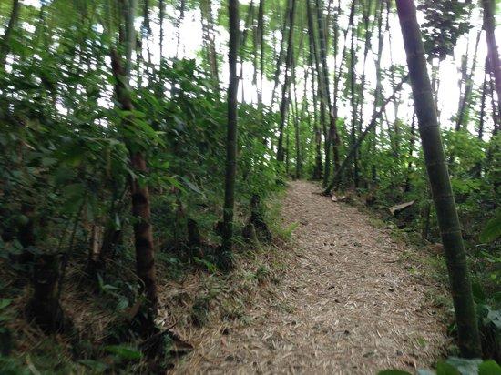 Bosques Del Saman - Alcala: Sendero