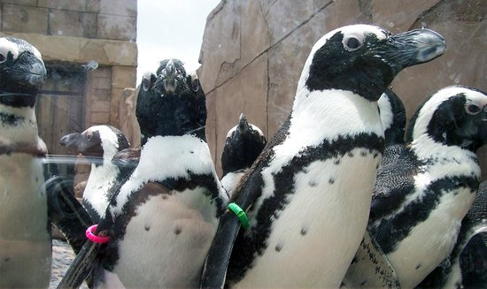 Riverhead, Νέα Υόρκη: Pop in on some African Penguins at our Pavilion.