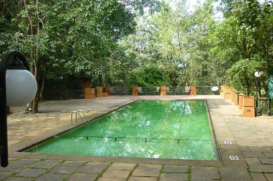 Pool Picture Of Vythiri Resort Vythiri Tripadvisor