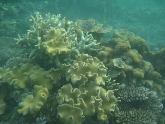 Floraly Komba : Coraux dans la baie