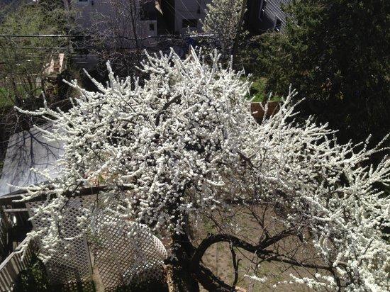 Herbivorian House: Blossom blossoming yellow plumb tree