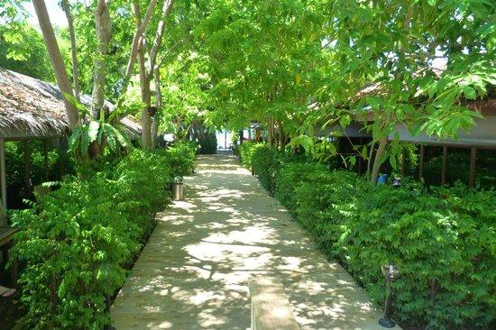 Tango Beach Resort: Jungle walkway through resort to the beach