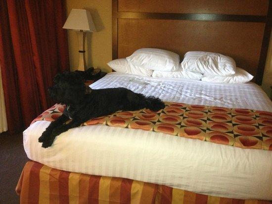 Drury Inn & Suites Phoenix Airport: Yara our PWD loves Drury beds.