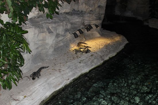 Gaylord Palms Resort & Convention Center: Baby Gators