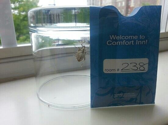 Comfort Inn & Suites Airport Dulles-Gateway : insects check in but they dont check out