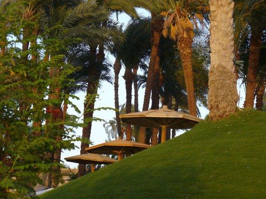 Mercure Luxor Karnak: Les palmiers remarquables