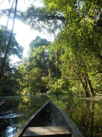 Tapiche Reserve: Heading up a creek in the dug out canoe