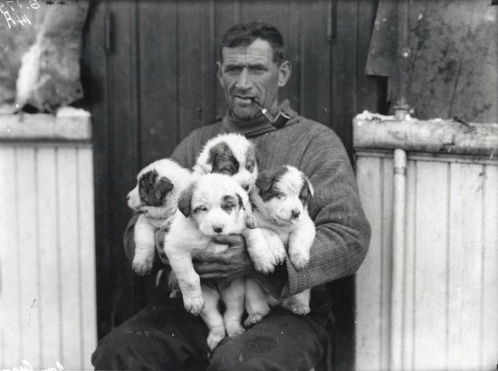 Dún Laoghaire, Irlandia: Tom Crean and his pups