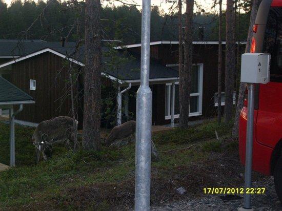 Holiday Club Kuusamon Tropiikki: Ξύλινα σπιτάκια για οικογένειες
