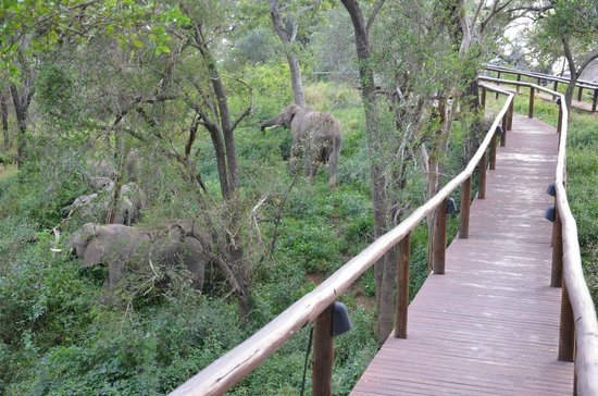 Lion Sands - Tinga Lodge: path to go to the rooms