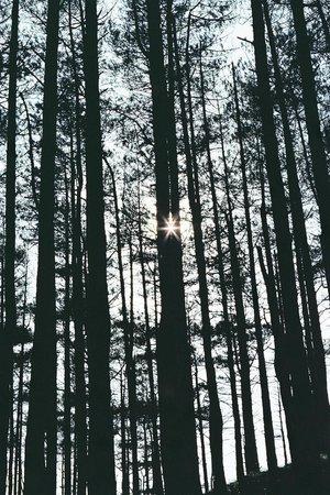 Pembrey Country Park: Sun as Star