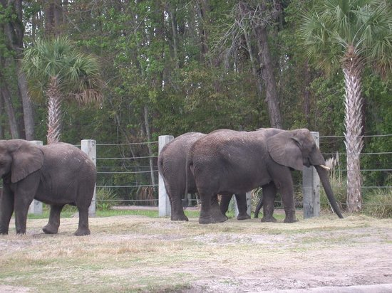 Restaurants Near Jacksonville Florida Zoo