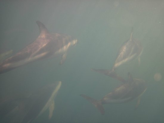 Dolphin Encounter: Many Dolphins - No telephoto lens used
