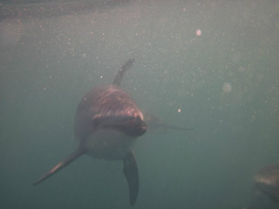 Dolphin Encounter : Dolphin swimming  - No telephoto lens used
