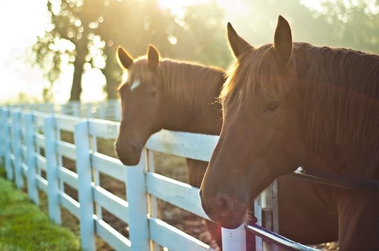 The Kentucky Horse Park is THE place to get close to horses!