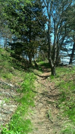 Crowninshield Island: Wooded trail