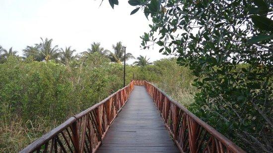 Occidental Cozumel: Puente entre la alberca de relajación y la playa