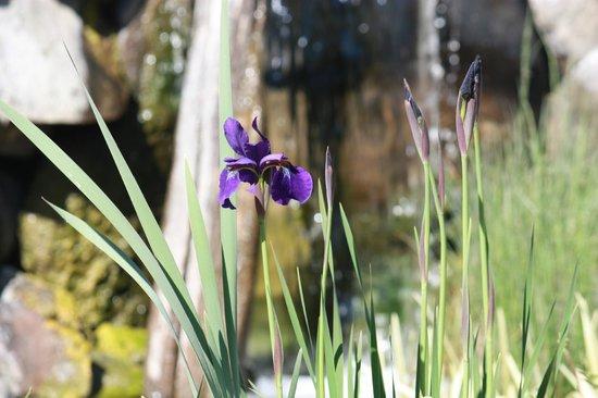 Cherry Chalet: Black Iris