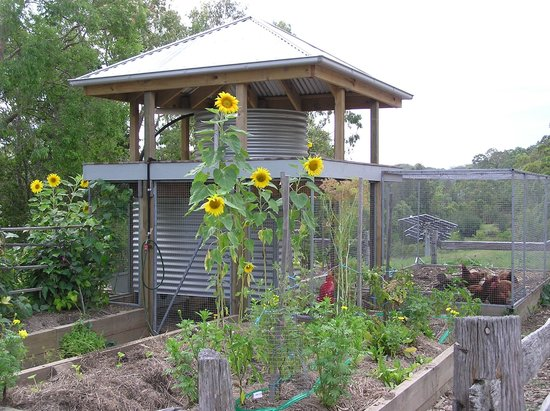 Bombah Point Eco Cottages: Chickens