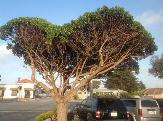 Embassy Suites by Hilton Hotel Monterey Bay - Seaside: Tree on grounds