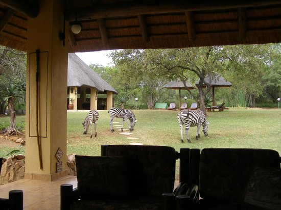 Royal Kruger Lodge: The locals