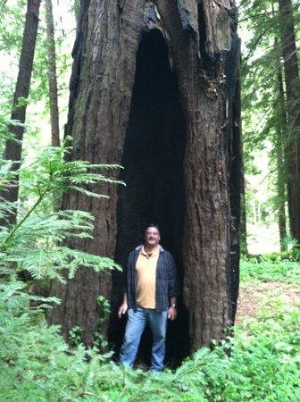 Glen Oaks Big Sur: Redwoods