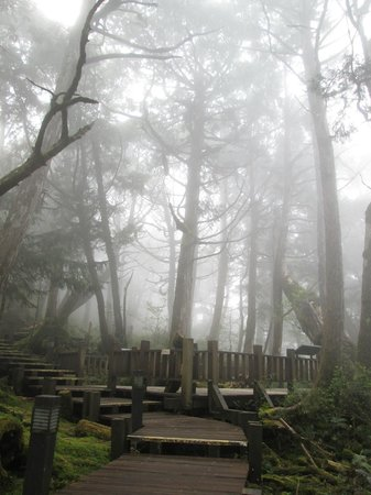 Yilan, Taiwán: Fog coming in - Ancient Forest Park