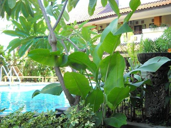Bali Sorgawi Hotel: Garden