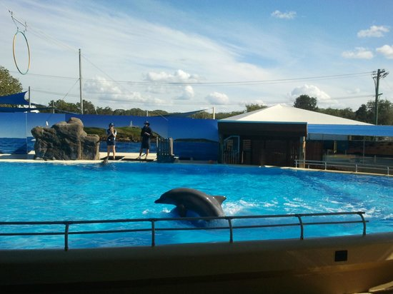 Pet Porpoise Pool - Dolphin Marine Magic: show