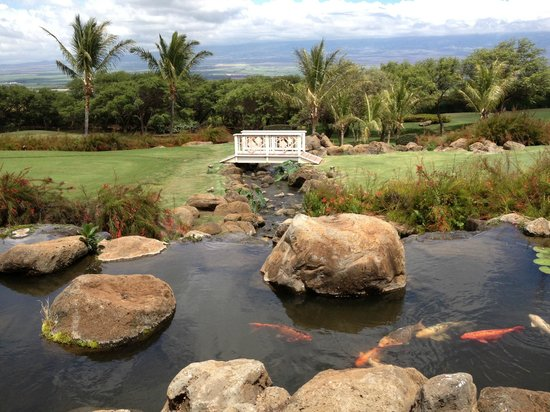Kahili Golf Course: Koi pond